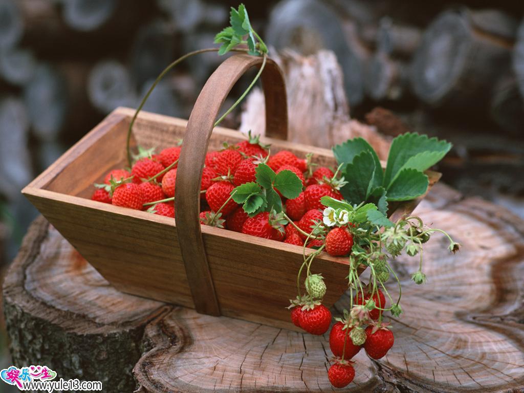 江苏邳州万亩草莓基地生产供应港上草莓 高清图片