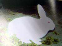 供应肉兔养殖技术