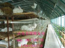 供应獭兔毛皮质量分析
