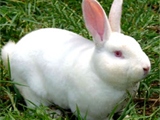 供应肉兔养殖设备