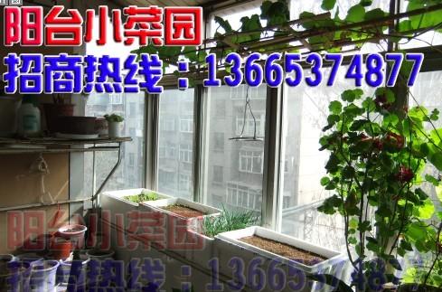 阳台小菜园图片