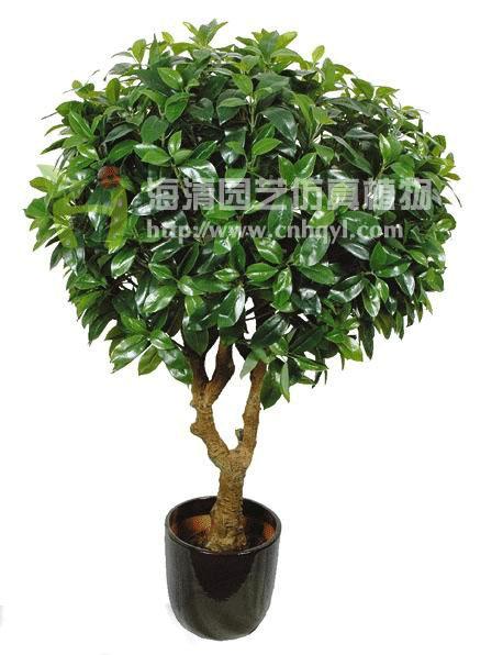 招财树和发财树的图片图片下载