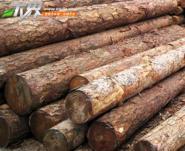 新疆省10米竹竿加工厂图片