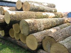 供应木材厂家