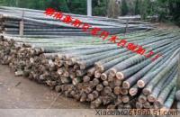 供应楠竹供应,楠竹供应商,楠竹供货商,楠竹厂家直销,楠竹生产厂家