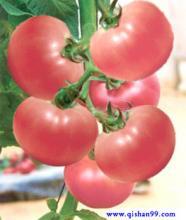粉红番茄种子--合作908