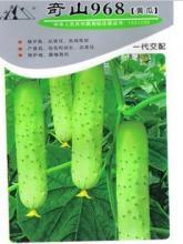供应968黄瓜种子高产抗病品质优