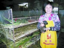供应黑豚的繁殖