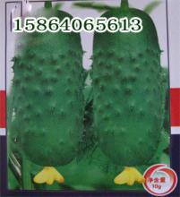玉兔水果型黄瓜种子