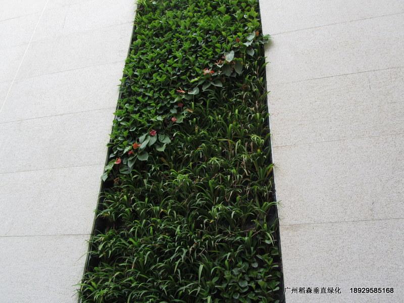 广东的垂直绿化