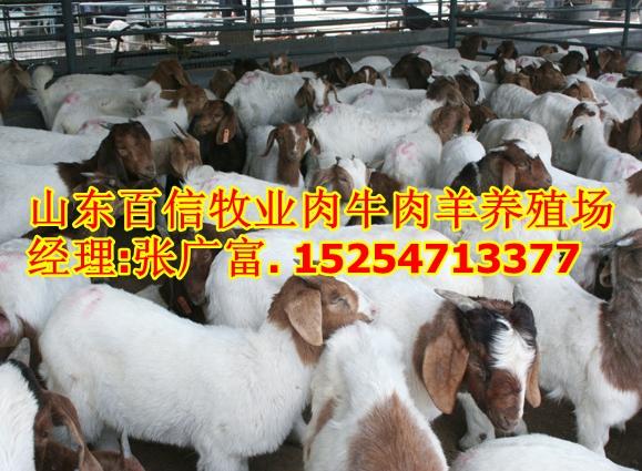 供应波尔山羊安徽波尔山羊养殖场