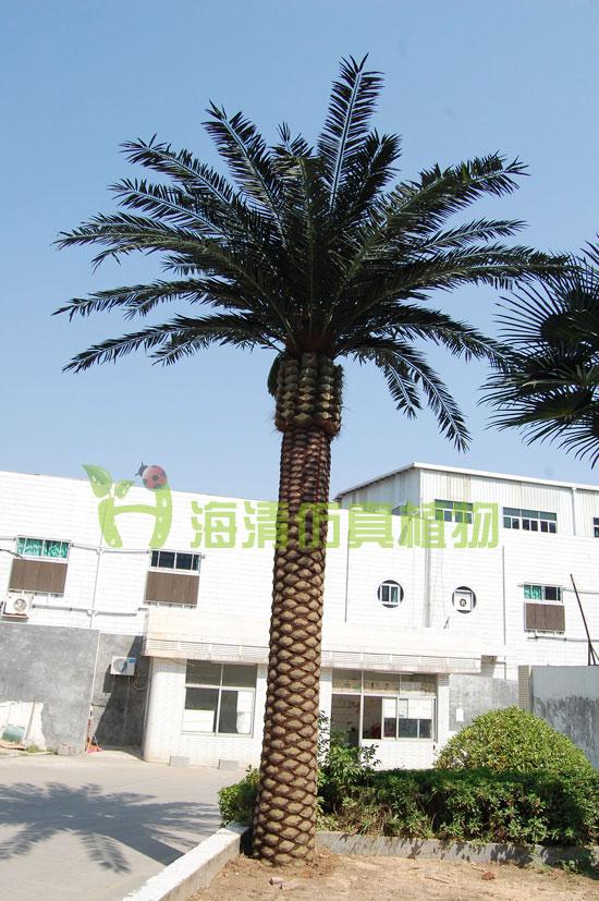 供应仿真海藻树 仿真棕榈树 仿真植物 仿真盆景
