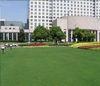 北京人造草坪,绿化草坪,街道草坪,草坪报价