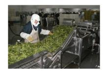 供应果蔬清洗网链生产