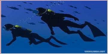 供应潜水作业服务公司水下摄影