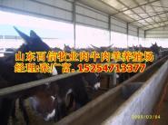 宁夏大型养馿厂宁夏肉驴养殖场图片