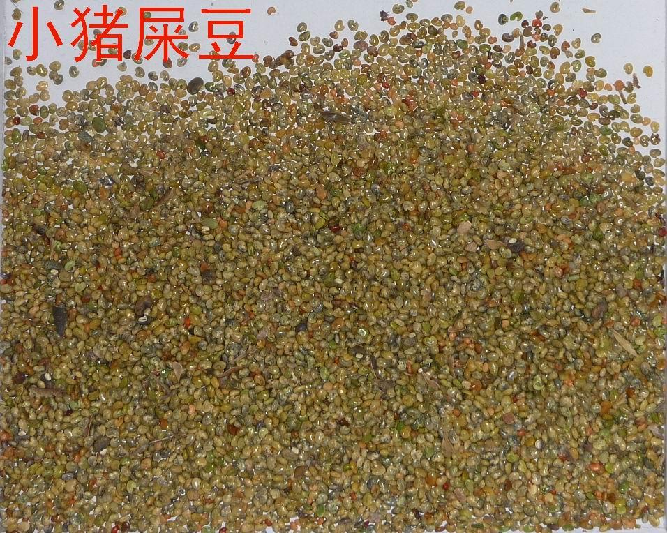 供应小猪屎豆种子