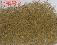 广西大猪屎豆种子批发图片