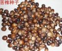 桂林苦椎种子价格图片