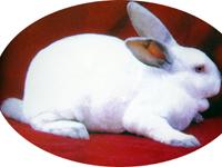 供应怎样看獭兔皮毛好坏