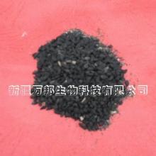 供应新疆黑种子