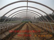 供应环保农业大棚