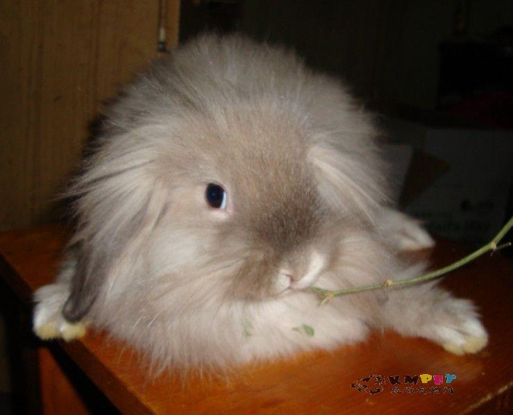 兔子的动物特征