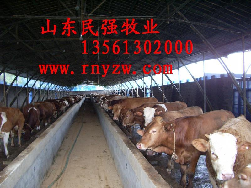山东文登肉牛羊驴养殖场文登养牛基图片图片